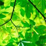 Ljus ovanför bladverk - miljömål är överskuggade?